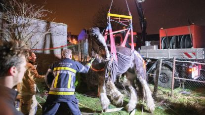 VIDEO. Paard gered door 15 brandweermannen in Kontich