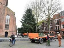 Tweedehands kerstboom siert Kerkplein in Woerden