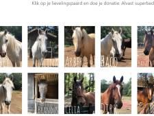 Actie: help paarden Arnhemse manege aan brokken en hooi