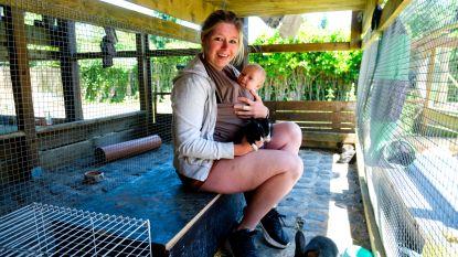 Tientallen in beslag genomen konijnen zoeken nieuwe thuis