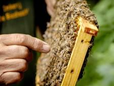 Ook de bijen komen sterk uit de vrieskou: 'De imker moet in deze periode van het bijenvolk afblijven'