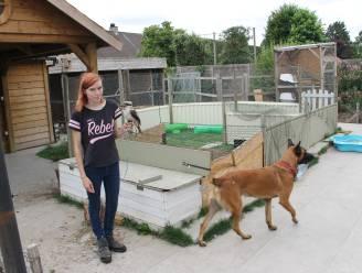 Anipaw-Petcare dringend op zoek naar nieuw onderdak voor 39 dieren
