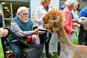 De alpaca's vallen in de smaak bij de bewoners van het woonzorgcentrum en de serviceflats