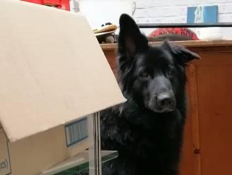 Neisken, de hond van kunstenaar Reneisken, is spoorloos. Help jij zoeken?