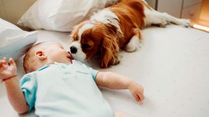 Hikken kan een cruciale rol spelen bij de ontwikkeling van de hersenen van baby's