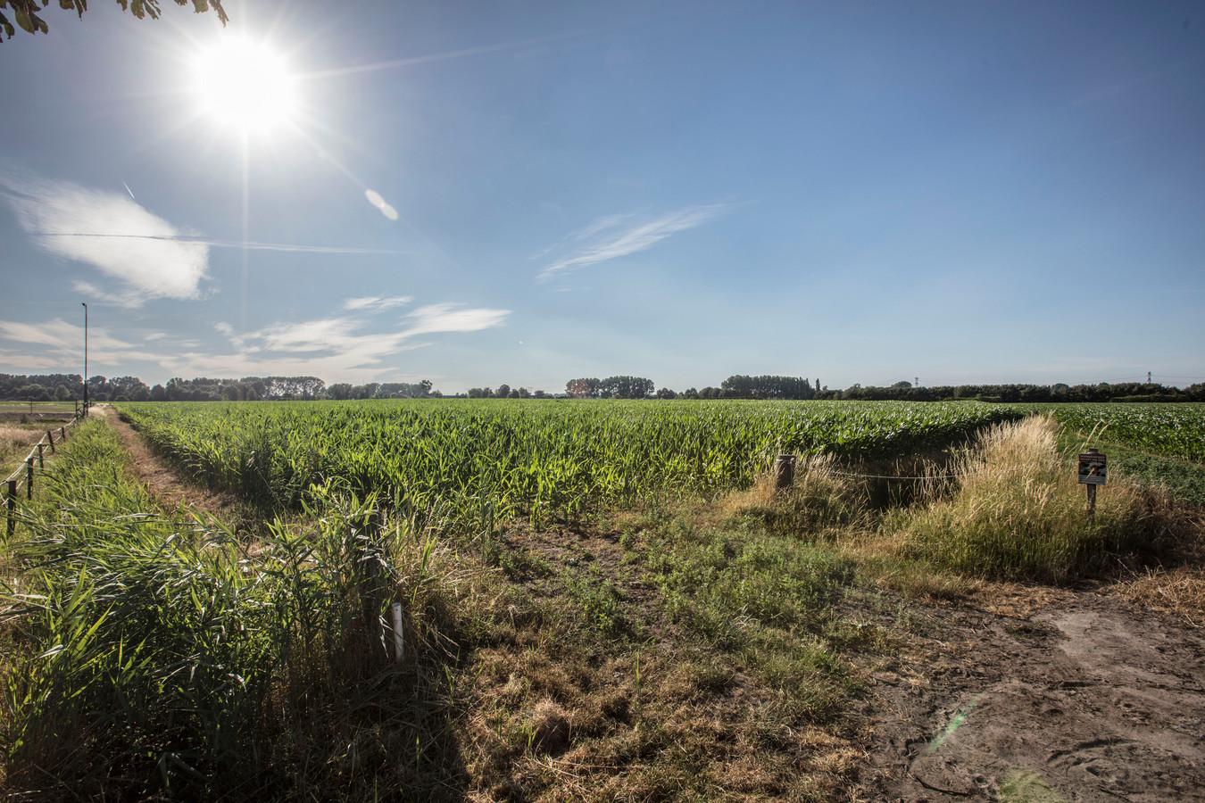 Mogelijk uitbreidingsgebied in buurtschap Aarle in Best