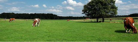 Someren trekt de handrem aan in het buitengebied: Voorlopig wijken geen boerderijen voor grote huizen