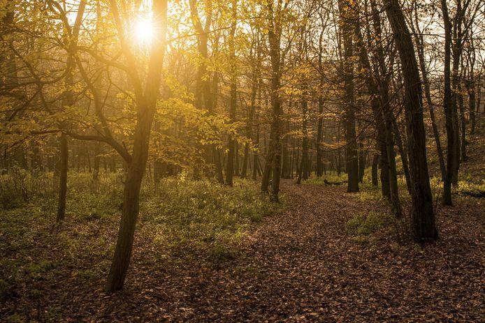 In een herdenkingsbos worden bomen geplant die een feestelijke gebeurtenis markeren zoal een geboorte, huwelijk of jubileum, maar deze kunnen ook geplant worden ter nagedachtenis aan een dierbare.