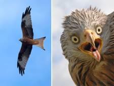 Na het zien van deze foto's kijk je nooit meer op dezelfde manier naar vogels