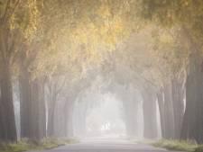 Herfst zorgt voor prachtige plaatjes in de Hoeksche Waard