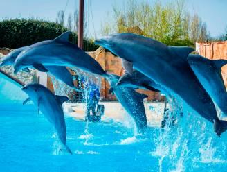 Brussels parlement stemt in met verbod op dolfinaria in Hoofdstedelijk Gewest