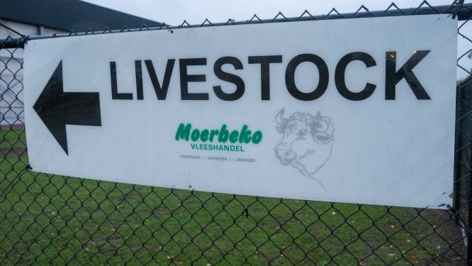 """Slachthuis Moerbeko: """"Nodigen Animal Rights uit voor open gesprek"""""""