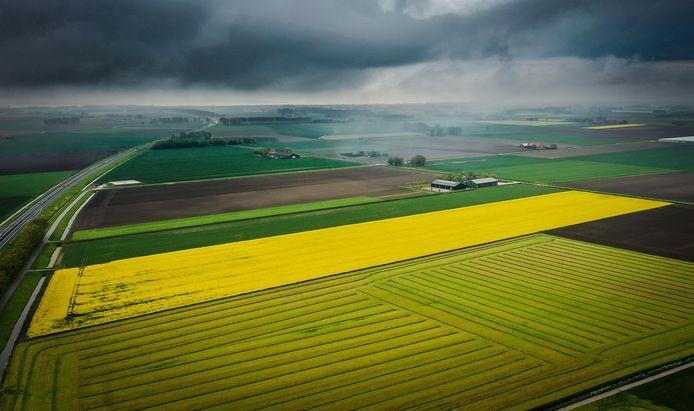 Het raapzaad veld langs de Langeweg in Hellevoetsluis gezien vanuit de lucht.