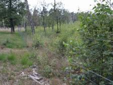 Op De Hoge Veluwe groeit een moerasbos met een  biodiversiteit om je vingers bij af te likken