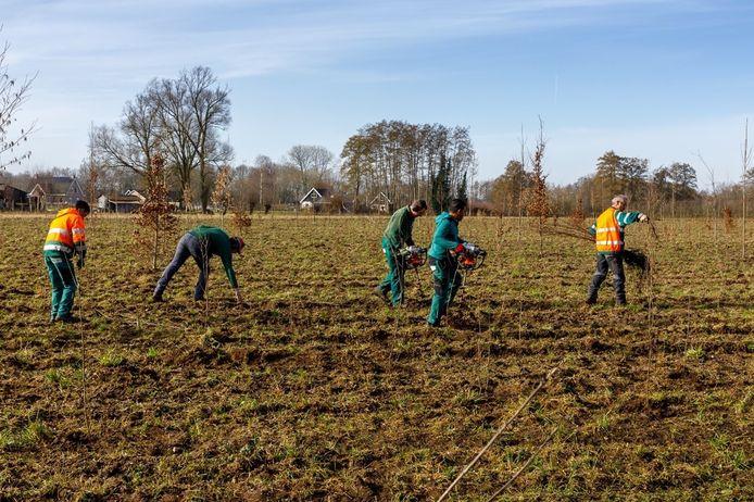 Bureau Arcadis plantte een nieuw bos aan de Korte Kopermolenweg bij Epe, in opdracht van de provincie Gelderland.