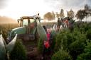 """Gerrit Brinkman:  ,,Bomen moeten lang groeien: kleintjes 3 á  4 jaar en grote 6 á 7 jaar."""""""