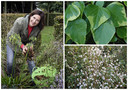 """Laurence Machiels: """"Groenblijvend hoeft niet altijd groen te zijn. Er zijn genoeg grijsbladige planten die de hele winter door hun blad houden."""""""