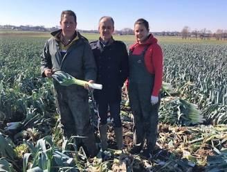 """Tekort aan seizoensarbeiders dreigt drama te worden voor West-Vlaamse landbouw: """"Duizenden Polen en Roemenen maakten vorige week rechtsomkeer"""""""