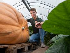 Fascinerend! Zo groeit pompoen van Gerjan (21) uit Wezep in vijf maanden van zaadje naar 600 kilo