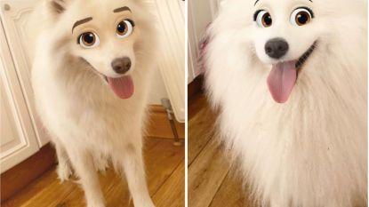 Nieuwe filter tovert je hond om tot een schattig Disney-figuur