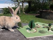 Stadsboerderij wil nieuwe konijnenheuvel zodat ze de beestjes niet elke dag in een mand naar de wei hoeven te brengen