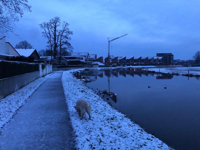De hond uitlaten in de sneeuw in Ulft.