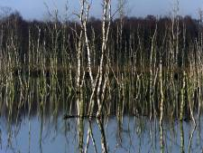 Rechter: blubber in Liesselse weides komt niet van vernattingsplan Peel