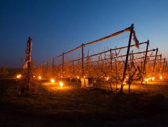 Sprookjesachtig mooi, maar na vier nachten vuurtje stoken zijn fruitboeren uitgeput