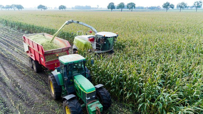 Een loonwerker haalt maïs van het land in de Kop van Overijssel.