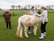Met pleisterwerk nieuwe opvangplek voor oude paarden, maar ideaal is het niet