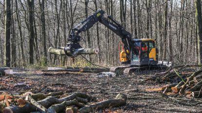 Provincie verwijdert uitheemse bomen uit domein Palingbeek