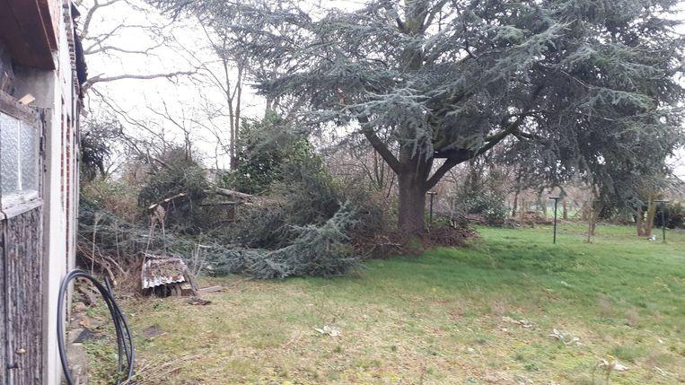 In 's Hondshuffel brak een grote tak af van een spar.