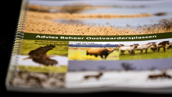 Advies: maximaal 1.500 grote grazers in de Oostvaardersplassen