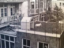 LTO Nederland: Vlees groeit niet op het dak