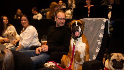 46 honden genieten van filmavond