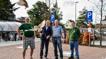 Burgemeester redt kerkuil: dier weer vrij na maanden revalidatie in vogelopvangcentrum