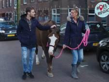 'Bij paardenmeisje Daniëlle staan beesten op eerste plek'