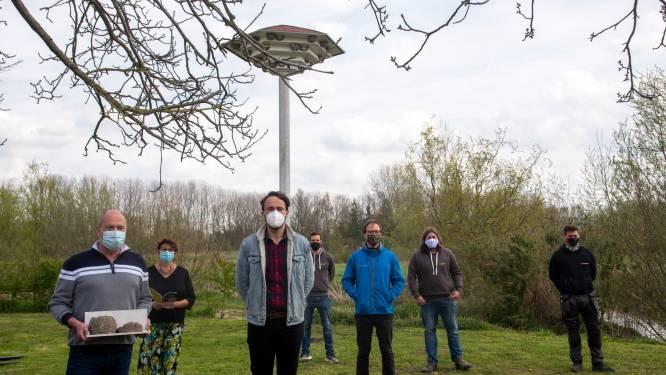 """Til voor 90 zwaluwnesten op Vaartplein: """"De grootste die we ooit bouwden"""""""