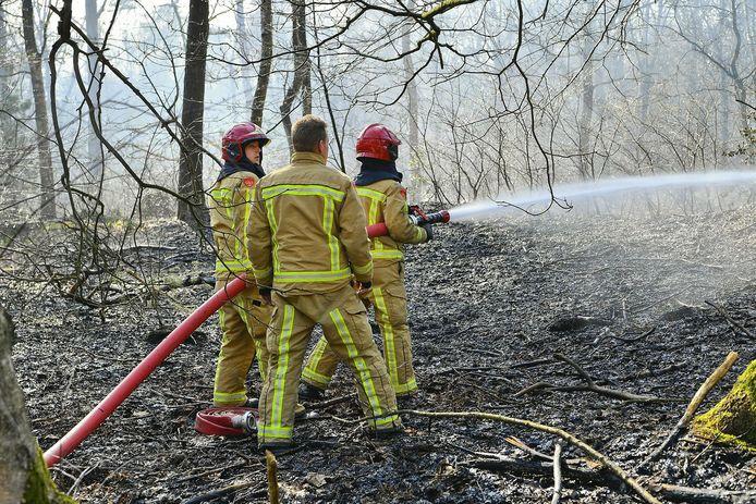 De kleine bosbrand in Waalre.