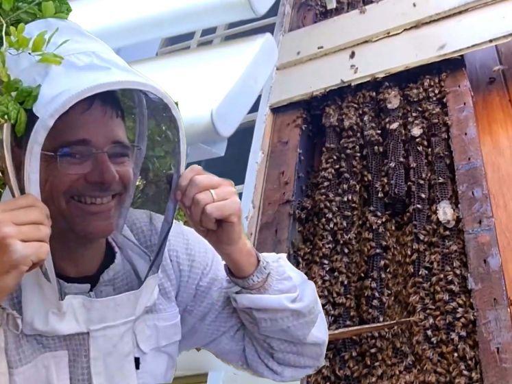 Bijen bouwen joekel van nest in muur woning