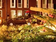 Vallende tak verwoest geparkeerde auto's op Dordtse Wiardi Beckmanplantsoen