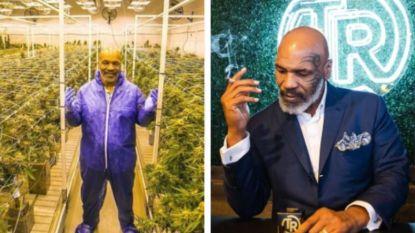 Impulsaankopen als witte tijgers dreven hem richting afgrond, maar nu vergaart Mike Tyson weer fortuinen dankzij... cannabis