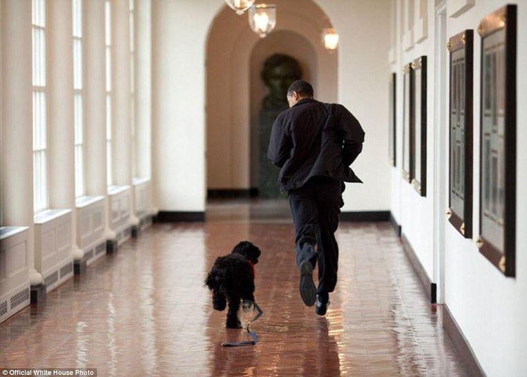 Obama loopt samen met hond Bo door het Witte Huis. De Portugese waterhond was toen, in 2009, 6 maanden oud.