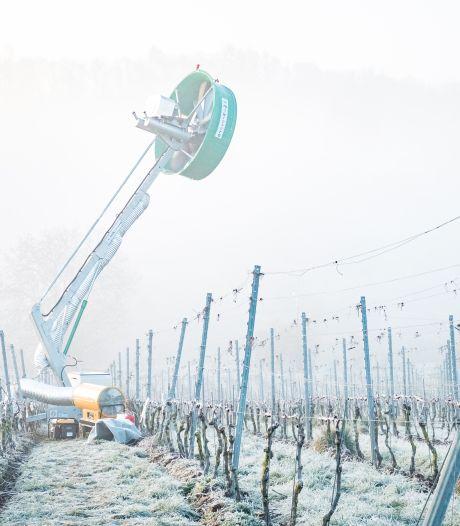 La tour à vent, un moyen insolite et écolo pour protéger les vignobles liégeois du gel