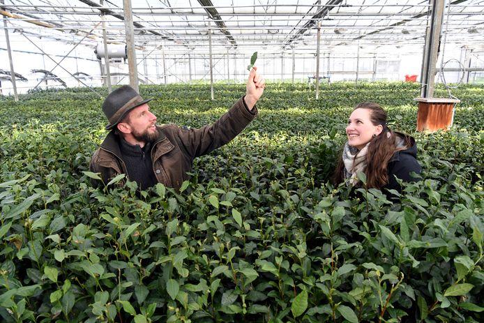 Johan Jansen en Dionne Oomen in de kas in Zundert, waar zij theeplanten kweken.
