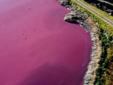 Une lagune vire au rose à cause de la pollution en Patagonie