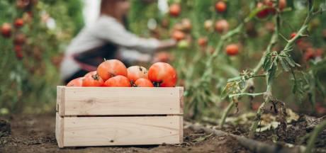 Supermarkten willen nu zelf ook weten hoe schimmig de wereld achter de blikjes tomaten is
