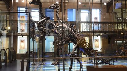 Sommige iguanodons van Bernissart zijn waarschijnlijk heel andere dinosoort. En ze kwamen mogelijk aan hun einde door gif