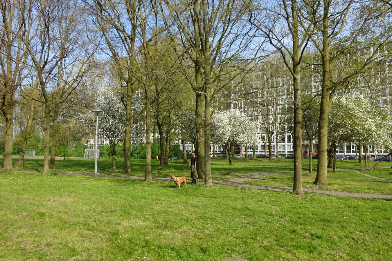 Park aan de Dommeringdreef.