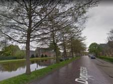 Groot bezwaar tegen bomenkap in Schipluiden: 'Negen elzen langs de Gaag moeten blijven'